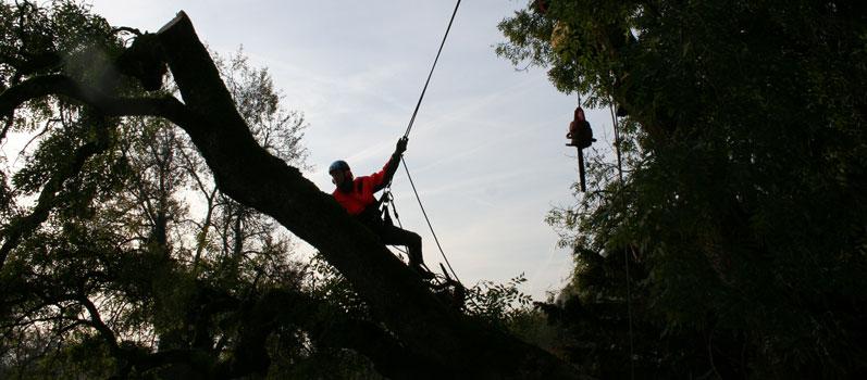 arboristični pregled